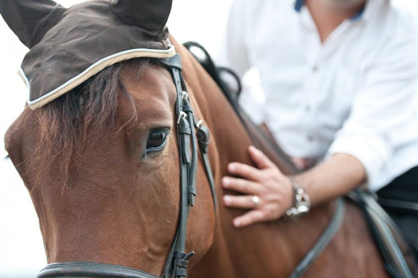 Equine Calming Supplements