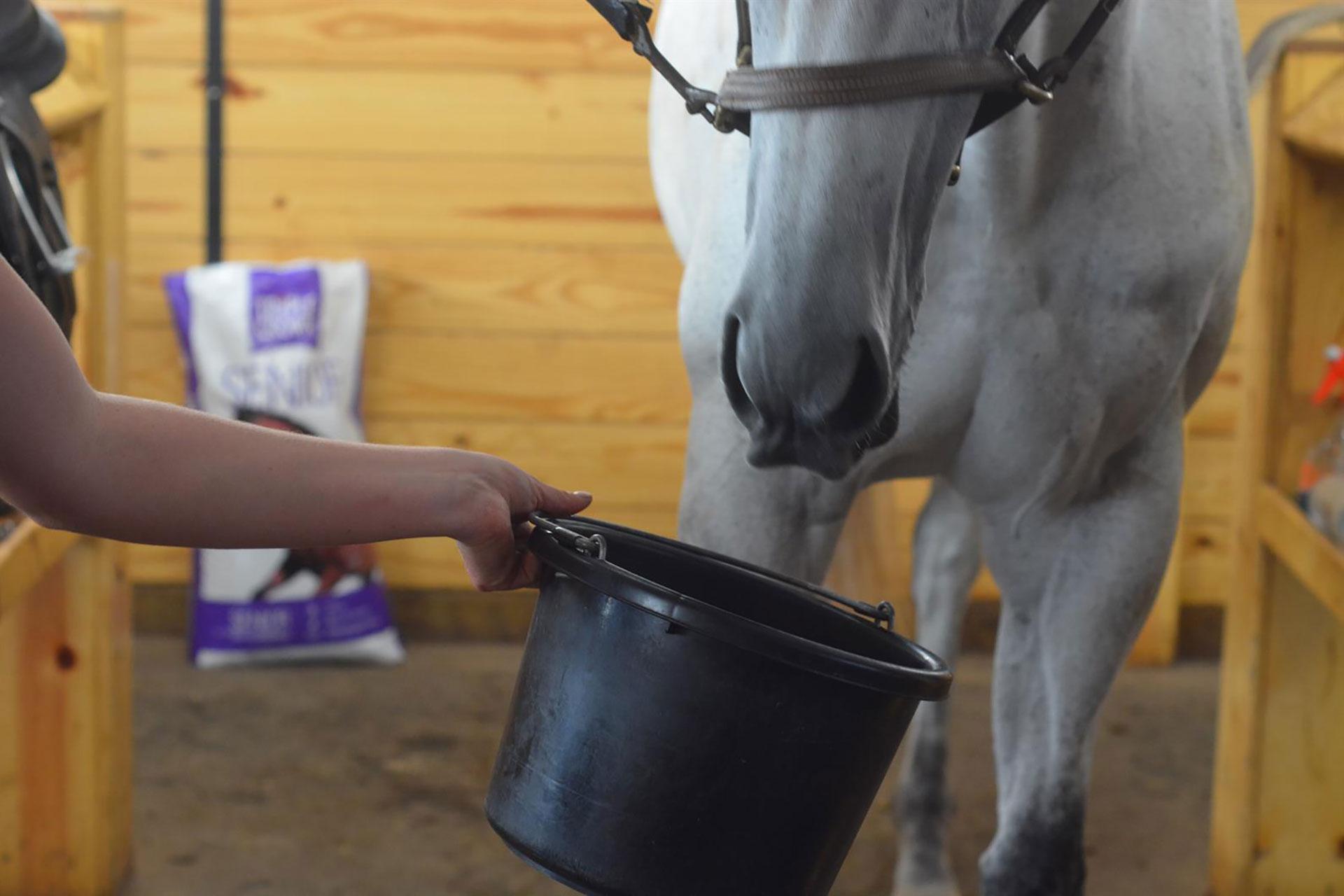 Equine Digestion Supplements and Probiotics