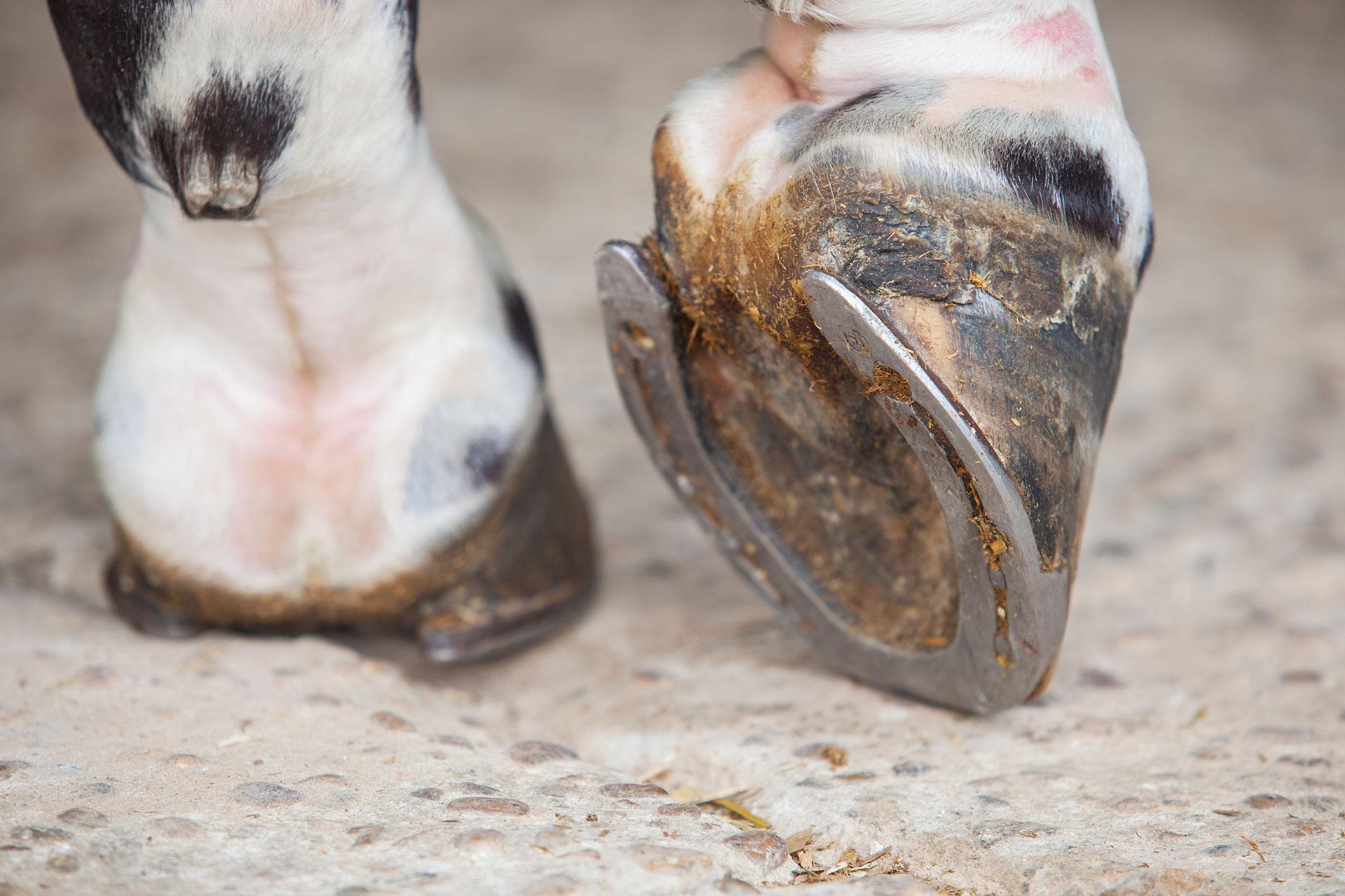 Equine Hoof Supplements