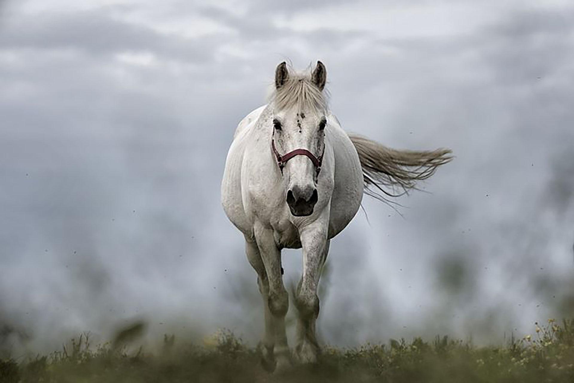 Equine Respiratory Supplements